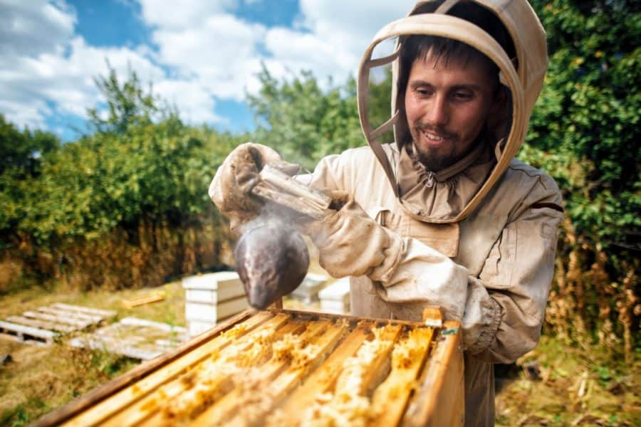 Beekeeper fumigates the beehive. Harvest honey in the apiary.
