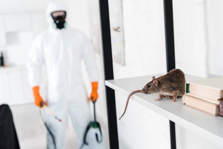 selective focus of rat on rack near exterminator