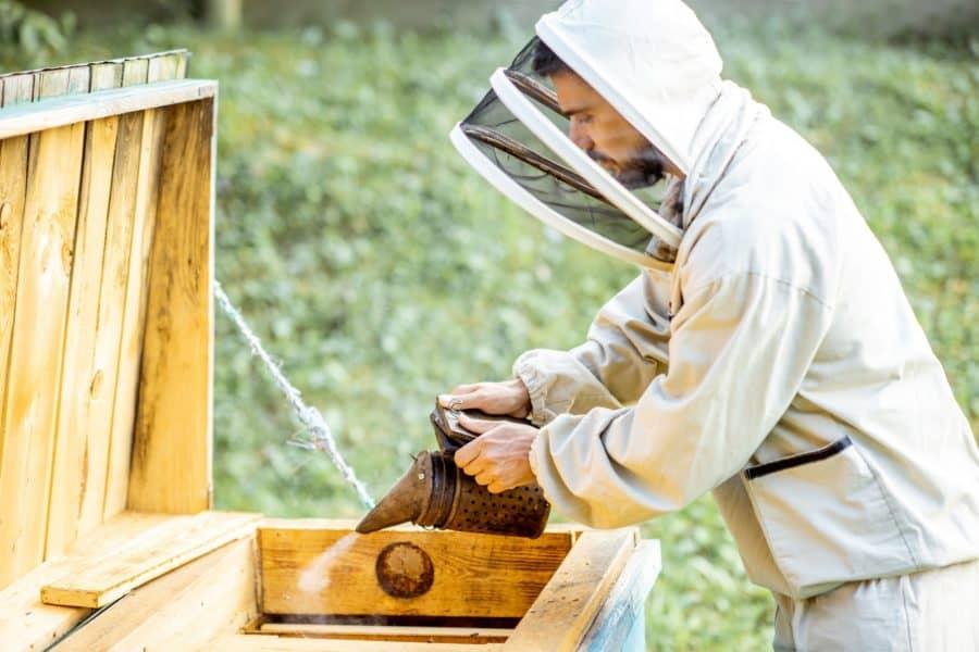 Smoking honey bees on the apiary