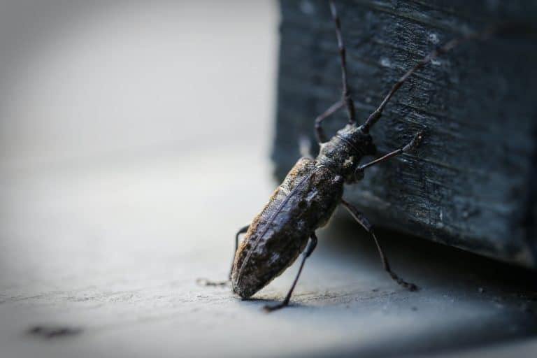Taken up north, this insect seems to do hardworking isn't, look like it try to push that object