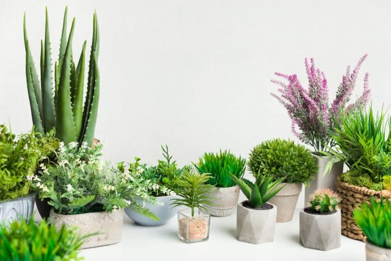 Various house plants in different pots against white wall