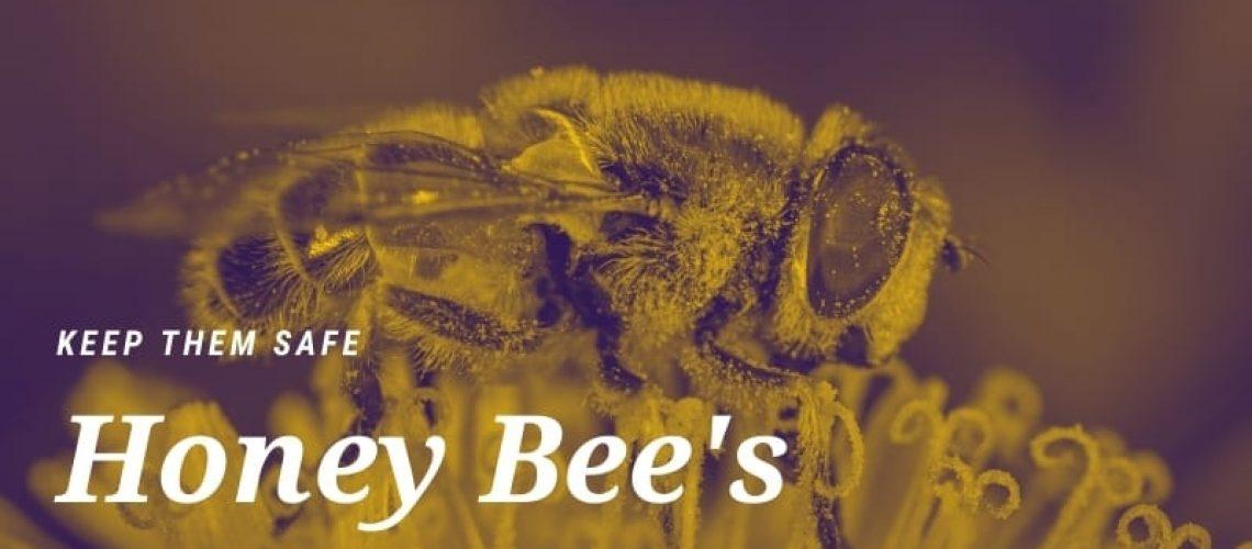 Keep Honeybees Safe from Predators