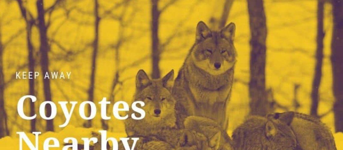 Keep away coyotes